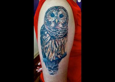 Tatto Eule